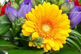 Barevné květy kytice — Stock fotografie