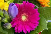 Ramo de flores de colores aislado sobre fondo blanco. — Foto de Stock