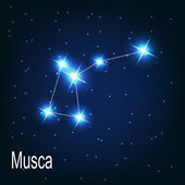 "The constellation ""Musca"" star — Stock Vector"