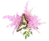 Tiger Swallowtail Butterfly on A Cone-flower — Stock Photo