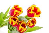 Beautiful tulips on white background — Stock Photo