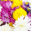 Stock Photo: Colorful flowers bouquet isolated on white background.