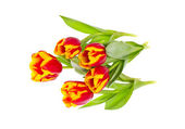 Beautiful Tulips on White Background — Stock Photo
