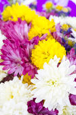 Colorful flowers bouquet isolated on white background. — Foto de Stock