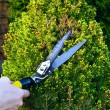Hands Are Cut Bush Clippers — Stock Photo #42208583