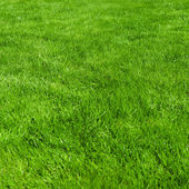Clean Beautiful Background Green grass. — Stock Photo