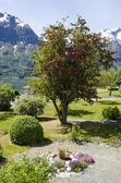 Norway - Beautiful View - Garden — Stockfoto
