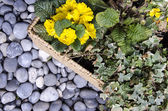 Botany - Floral arrangement — Stock Photo