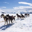 Alaska - Dog Sledding — Stock Photo #27290811