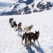 Stock Photo: Alaska - Dog Sledding