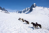 Alaska - Dog Sledding — Foto de Stock