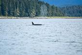 Aventura para ver baleias — Fotografia Stock