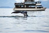 Whale watching adventure — Stockfoto