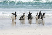 Penguins - Magellan and Gentoo on the beach — Stock Photo