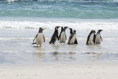 Penguins - Magellan and Gentoo on the beach — Foto de Stock