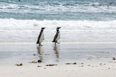 Magellanic Penguins on the beach — Foto Stock