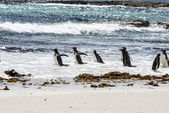 Gentoo Penguins looking at the waves — Stok fotoğraf