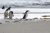 Penguins - I Am In A Hurry ! — 图库照片