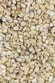 Coffee - Green Coffee Beans — Stock Photo