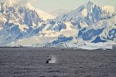 Coastline Of Antarctica With Ice Formations — Foto de Stock