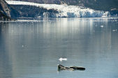 Glacier Bay National Park — Fotografia Stock