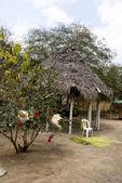 Ecuador - The Countryside — Stock Photo