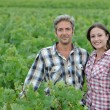 Couple of winemakers standing in vineyard — Stock Photo #13930446