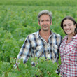 Couple of winemakers standing in vineyard - Stock Photo