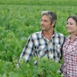 Couple of winemakers standing in vineyard — Stock Photo #13930449