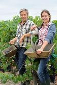 Smiling couple of harvesters standing in vineyard — Stock Photo