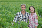 Couple of winemakers standing in vineyard — Stock Photo