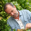 Senior man looking at plants in private garden - Stockfoto