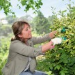 Senior woman taking care of flowers in garden - Stockfoto