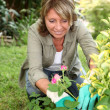 Senior woman taking care of flowers in garden - Stock Photo