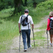 Back view of senior couple hiking in forest pathway — Stock Photo
