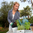 Woman in garden ready to water fresh plants - Stockfoto