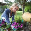 Cheerful blond woman planting flowers in garden - Stockfoto