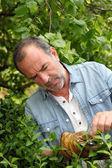 Senior hombre mirando las plantas en jardín privado — Foto de Stock