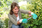Senior woman taking care of flowers in garden — Stock Photo