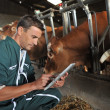 Stock Photo: Farmer in barn using digital tablet