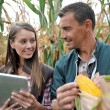 Farmers in cornfield using electronic tablet — Φωτογραφία Αρχείου