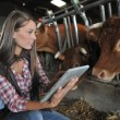 Woman in barn using electronic tablet - Stock Photo
