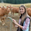 Woman farmer in front of cattle using tablet - Stock Photo