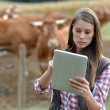Woman farmer in front of cattle using tablet — ストック写真