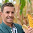 Farmer in field checking on corncobs - Stockfoto
