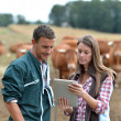 Farmer and woman in cow field using tablet — Stock Photo