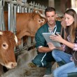 Farmer and veterinarian checking on cows — Stock Photo #13965609