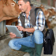 Stock Photo: Breeder in cow barn using digital tablet