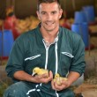 Stock Photo: Cheerful farmer holding ducklings in his arms