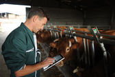 Farmer in barn using digital tablet — Stock Photo